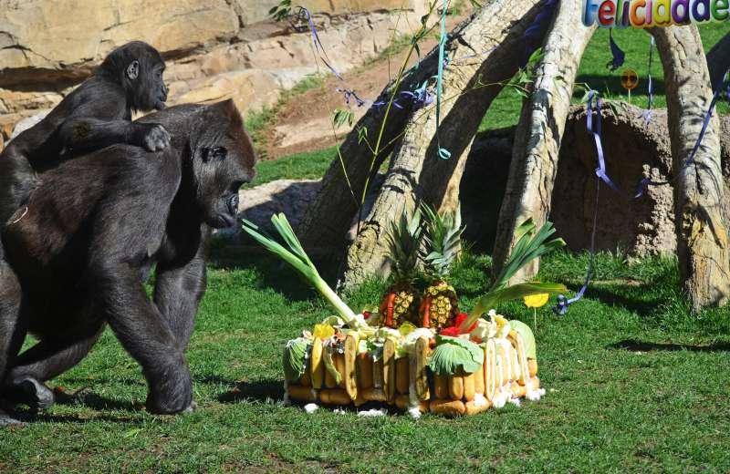 Los gorilas con la tarta. EPDA