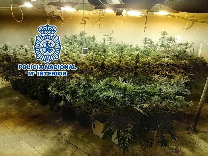 La plantación, en una imagen de la Policía.
