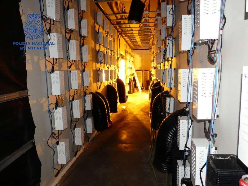 Interior de la nave industrial donde se almacenaba la plantación