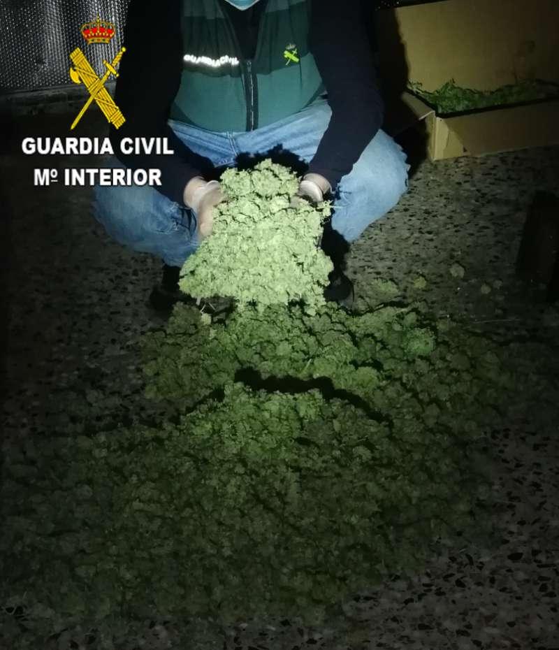 Imagen de cogollos de marihuana proporcionada por la Guardia Civil.