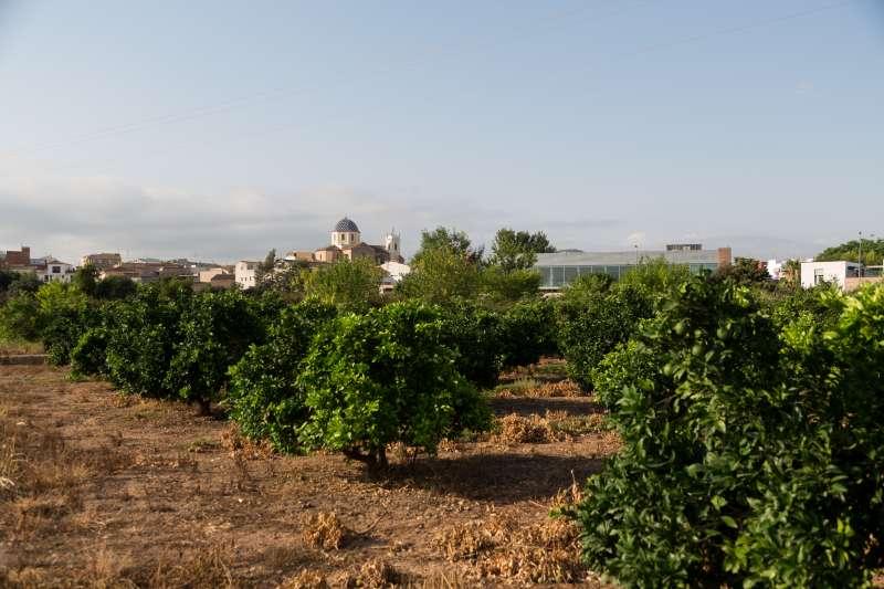 Horts de Vilamarxant. EPDA.