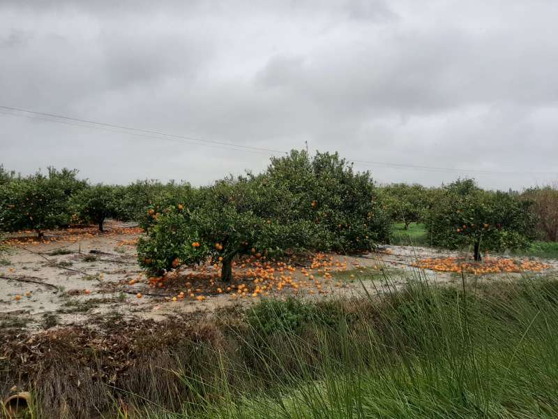 Daños agrícolas en La Ribera. EPDA