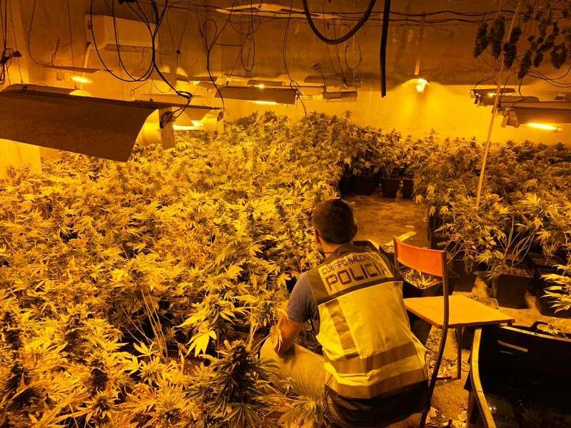 Laboratorio de cultivo de marihuana