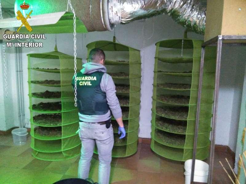 Cultivo de marihuana en la Pobla de Vallbona. EPDA