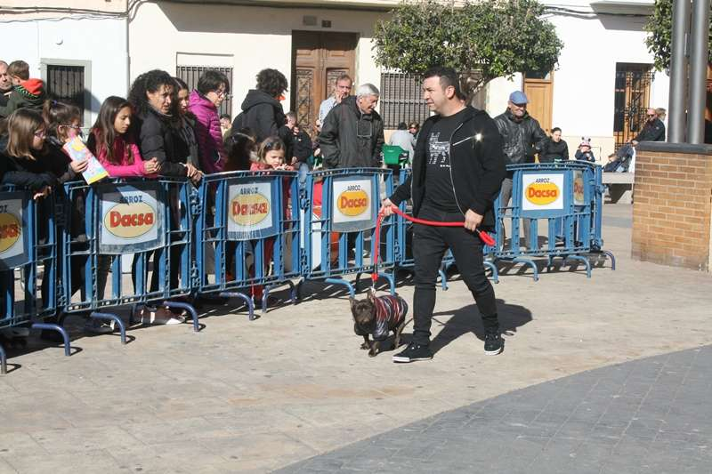 Desfile de mascotas en Almàssera. EPDA