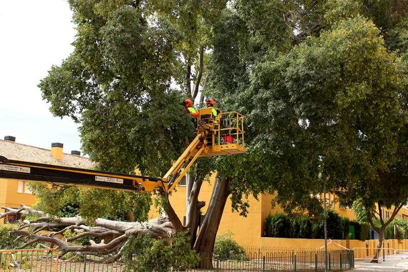 Trabajos de los operarios en el árbol caído . / EPDA