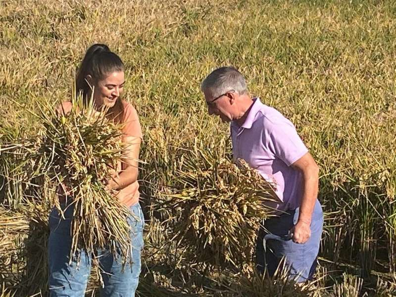 Mollà ha participado en la siega tradicional del arroz, organizada por la D.O. Arròs de València en El Palmar junto a la Albufera. EFE