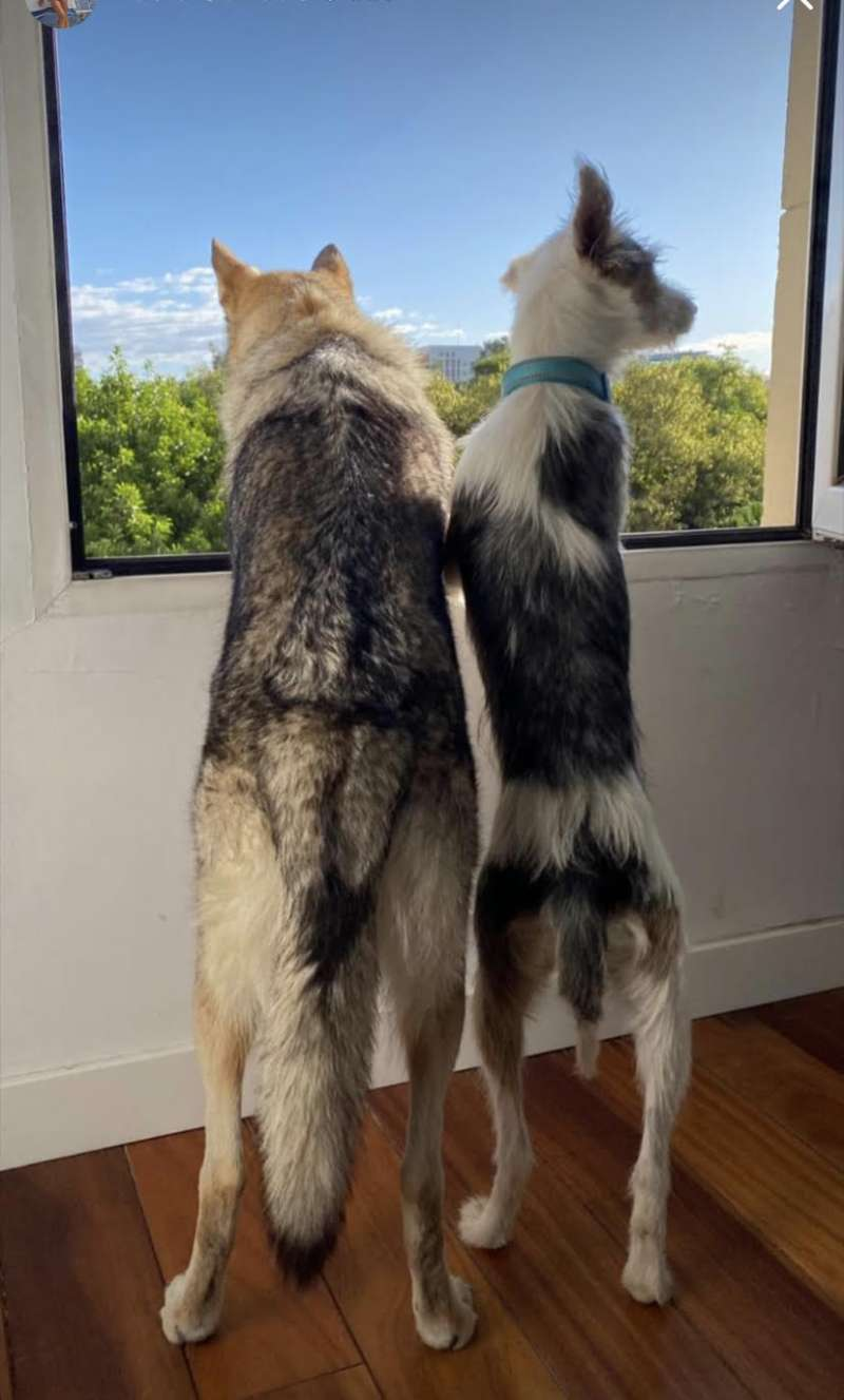 Dos perros con vistas a la calle. EPDA