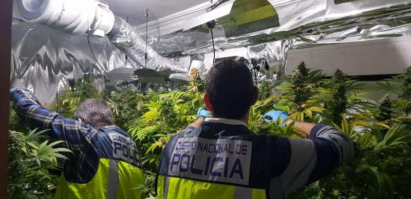 Plantación descubierta por la Policía Nacional.