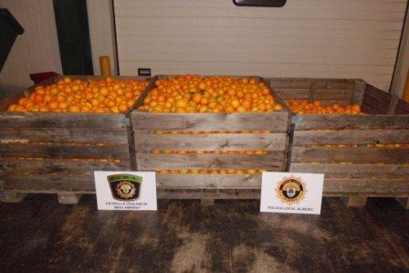 Naranjas recuperadas. FOTO: PL