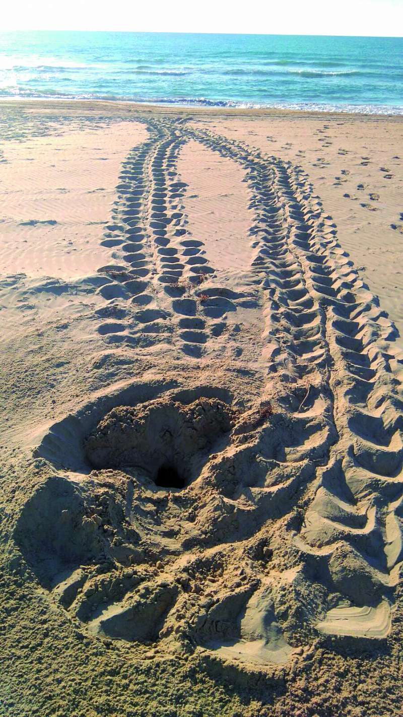 Rastro en la arena de una tortuga en una de las playas. / epda