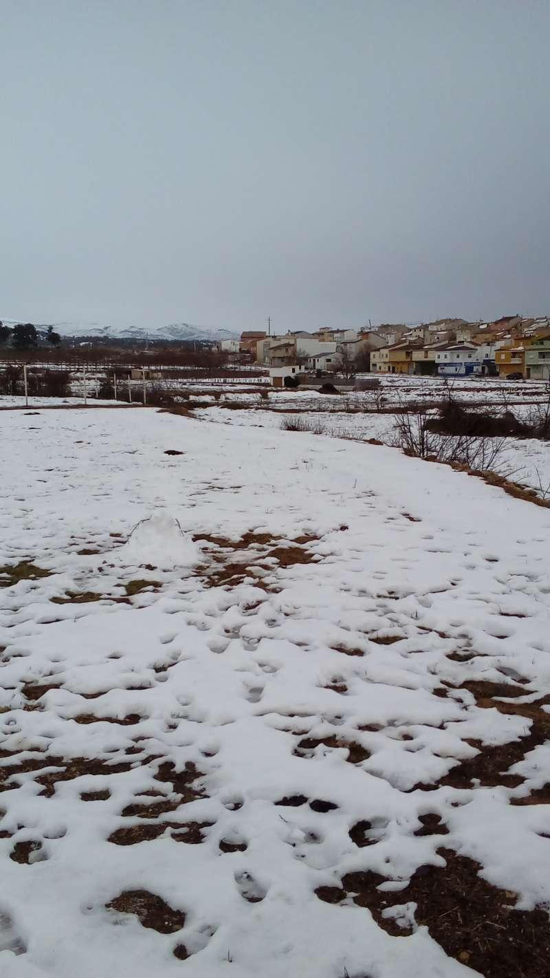 Requena nevada