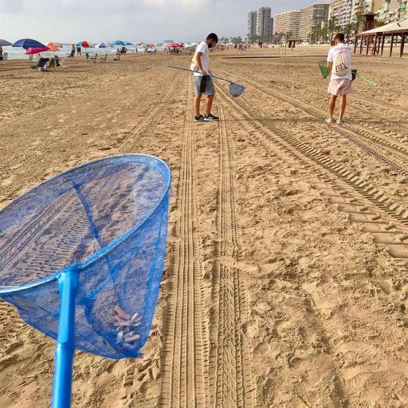 Imagen de la recogida de colillas en una playa de Cullera, donde está prohibido fumar. EFE