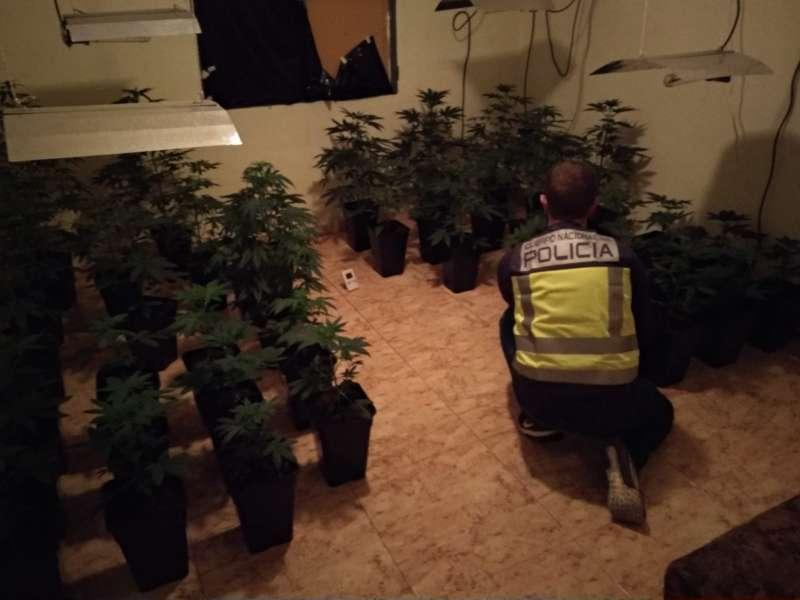 Imagen de las plantas de marihuana intervenida cedidas por la Policía Nacional. EFE