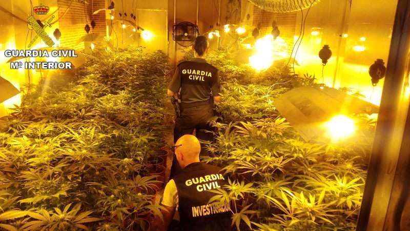 Plantación de marihuana requisada en la operación