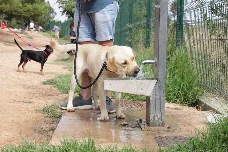 Una zona de esparcimiento canino de Paterna