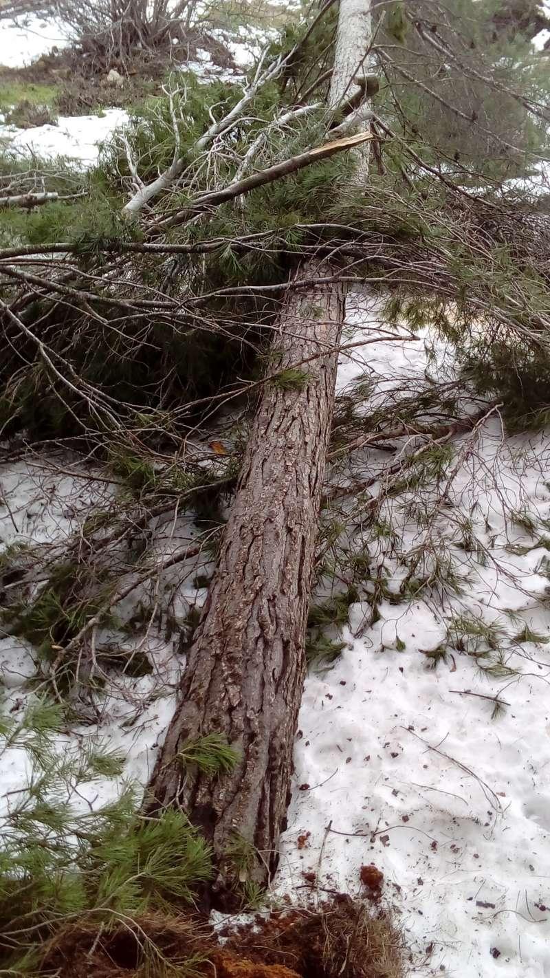 La nieve llega a la comarca sin causar graves daños como los de 2017