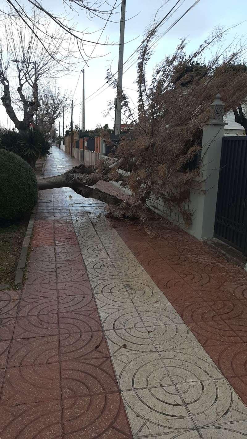El viento arrancó de cuajo algunos árboles