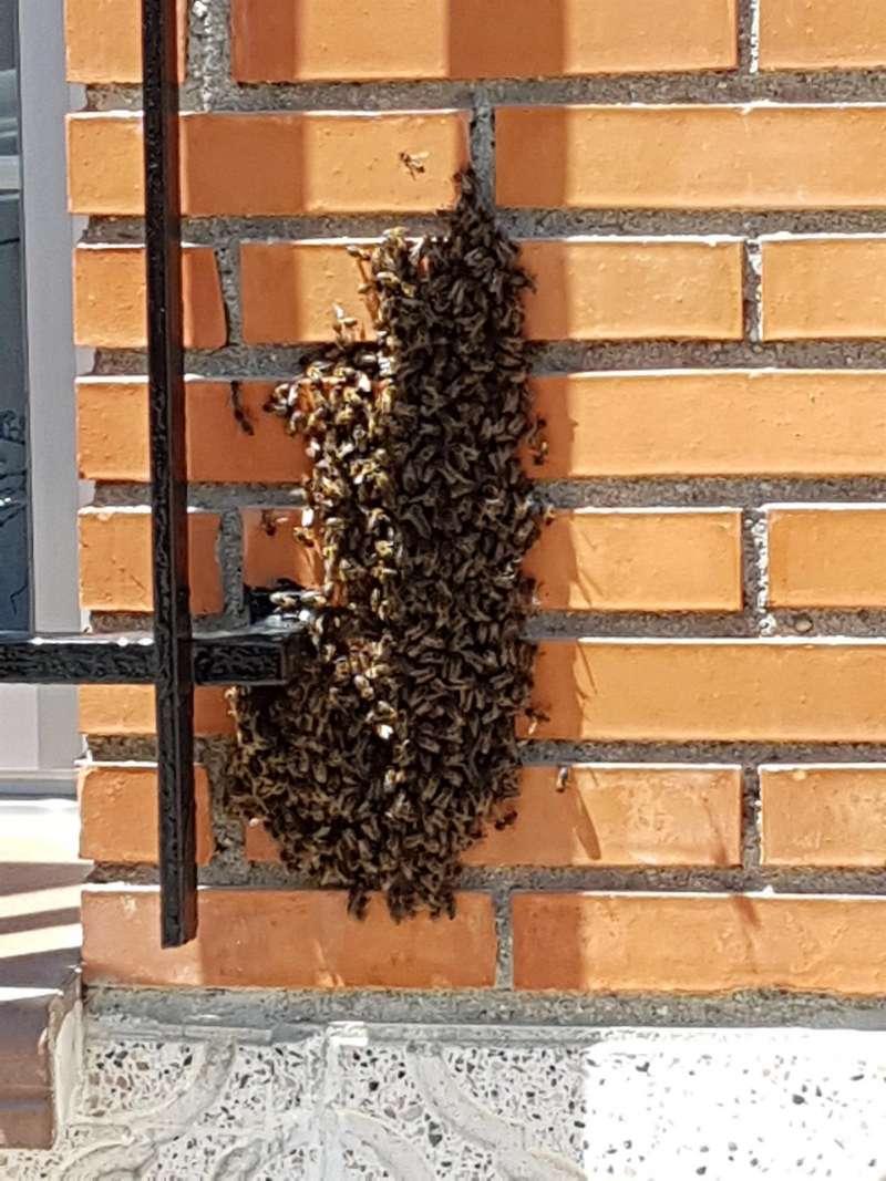 Un enjambre de abejas en la ventana de una viviendal