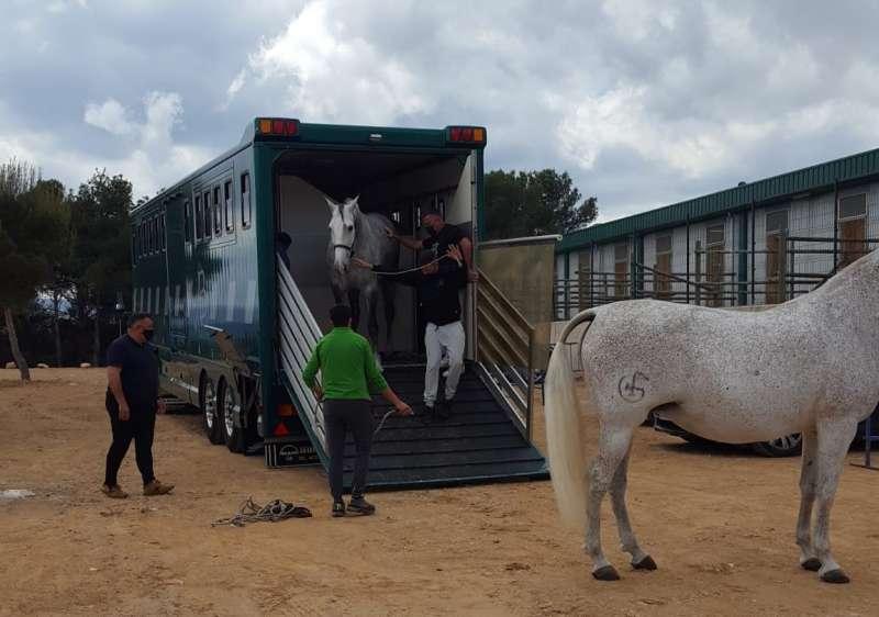 Todos los caballos participantes se encuentran ya en Segorbe