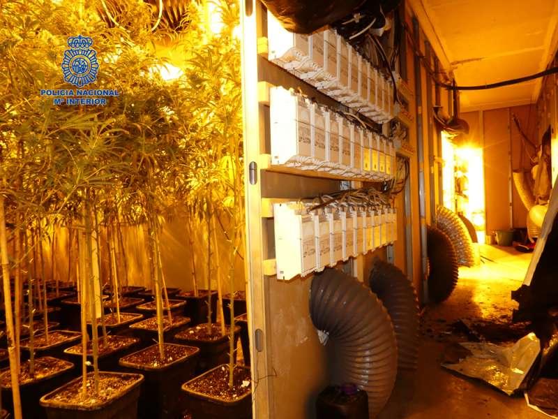 Plantación indoor de marihuana desmantelada en la localidad de Alaquàs.