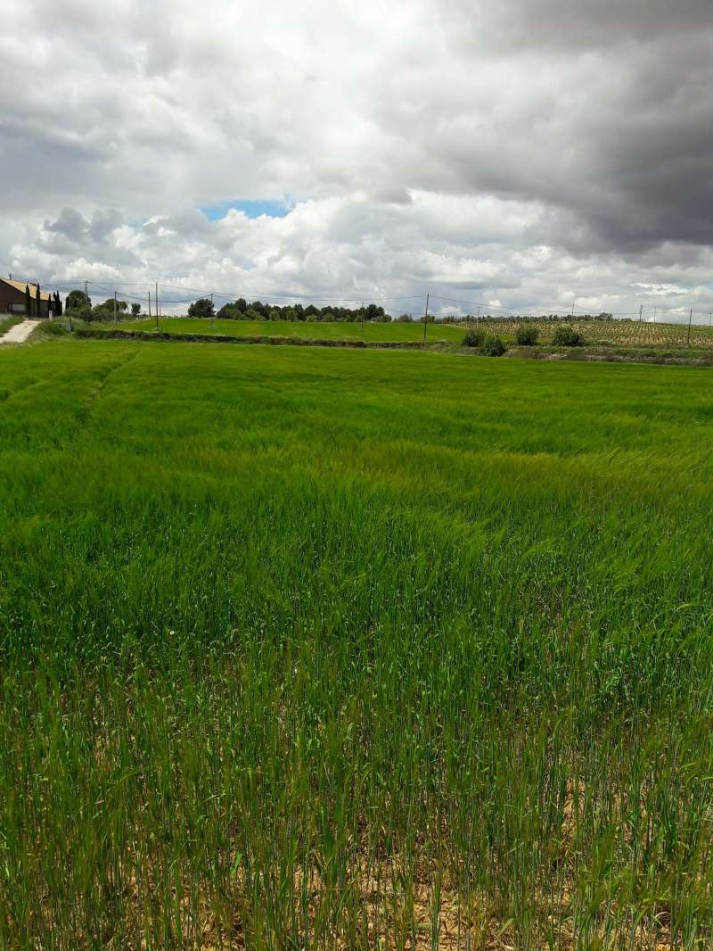 Campo de cereales de la comarca