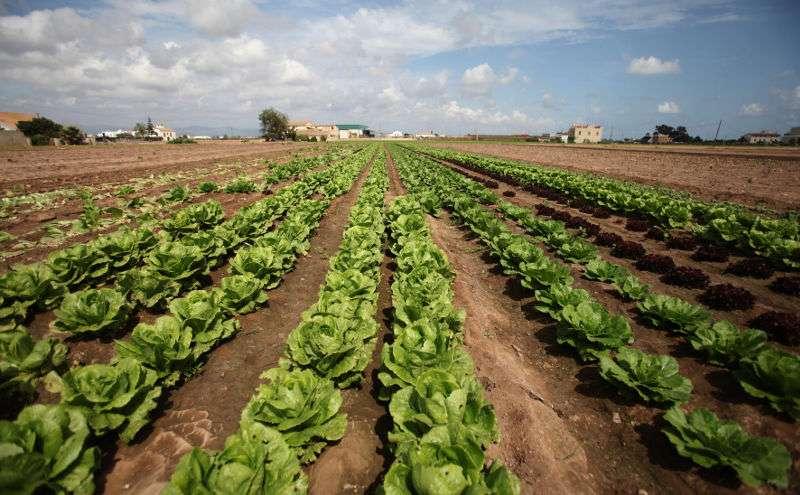 Panorámica de uno de los miles de campos de la Comunitat Valenciana