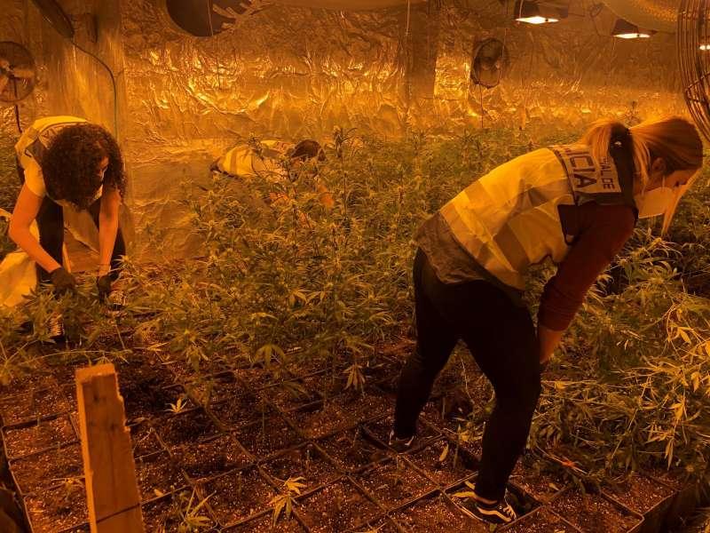 Imagen de la plantación desmantelada facilitada por la Policía Nacional.