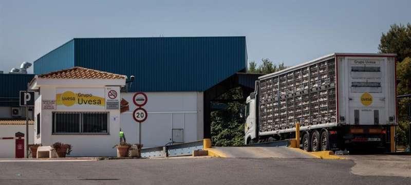 Un camión con gallinas a la entrada principal de la empresa cárnica Grupo Uvesa de Rafelbuñol (València), donde se han diagnosticado 7 casos de coronavirus. EFE