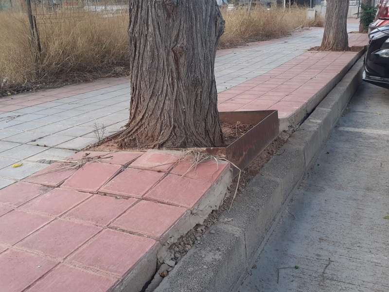 Árboles en Albal. EPDA